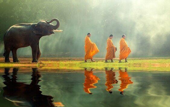 Monges budistas com elefante