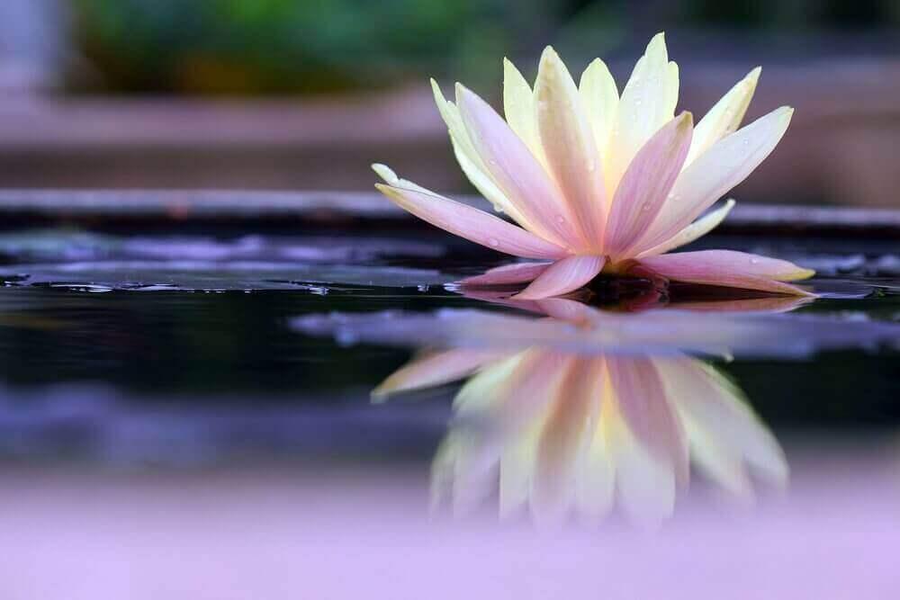 Flor delicada na áuga