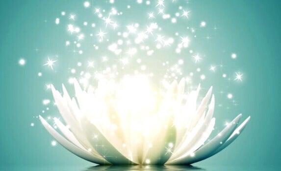 Flor se abrindo e brilhando