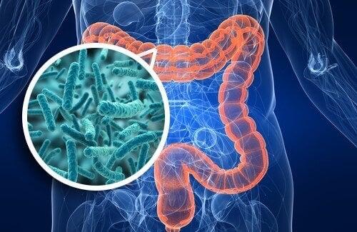 Sistema intestinal