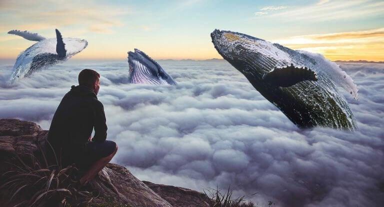 Homem observando céu com baleias voando