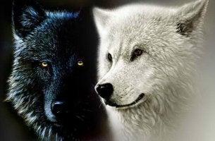 Lenda cherokee dos dois lobos