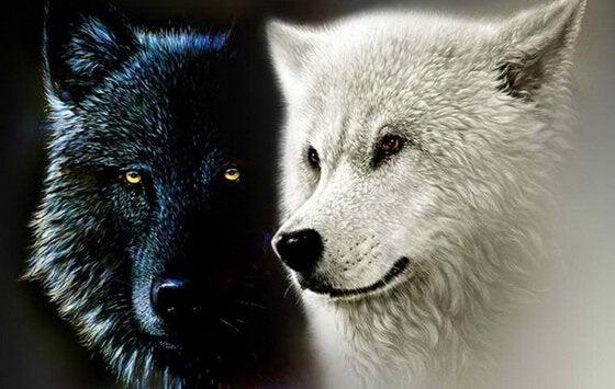 A lenda cherokee dos dois lobos e das nossas forças interiores
