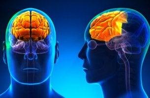Lobo frontal: o que é e quais são suas funções no nosso cérebro?