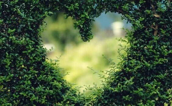 Plantas em formato de coração