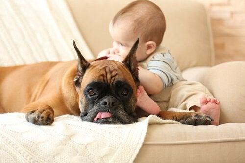 Bebê com cachorro no sofá