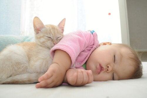 Bebê dormindo com gato