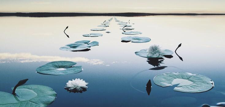 Folhas de plantas em um lago parado