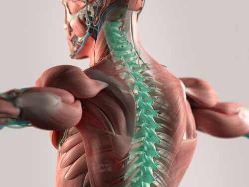 Líquido cefalorraquidiano: o suporte do nosso sistema nervoso central