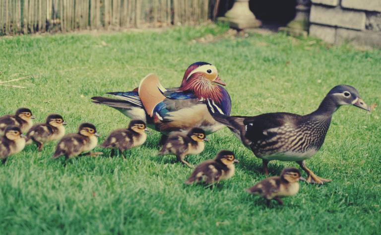 Pássaros no jardim