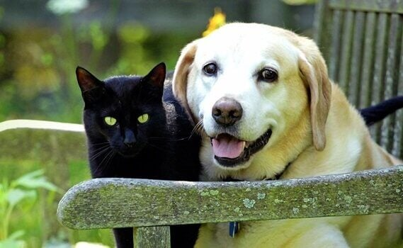 Como lidar com o luto pelos animais de estimação