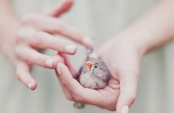 Mãos segurando passarinho