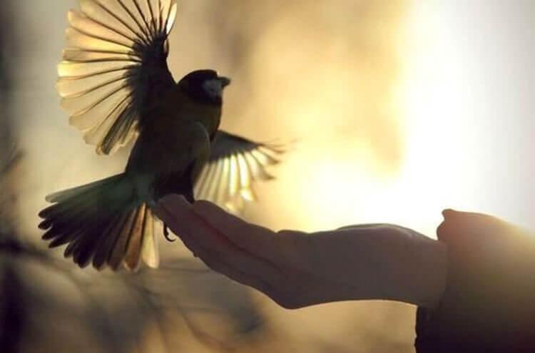 Pássaro abrindo asas em mão humana