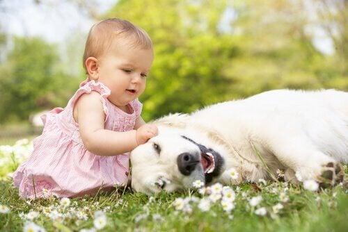 Bebê brincando com cachorro