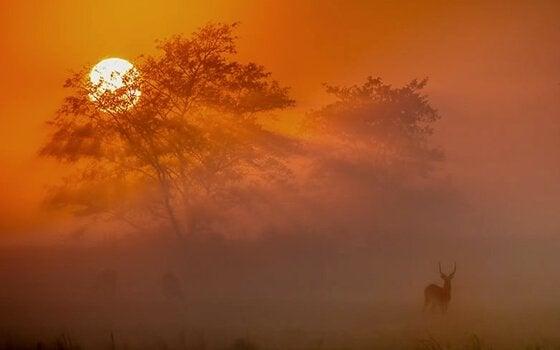 Sol na savana africana