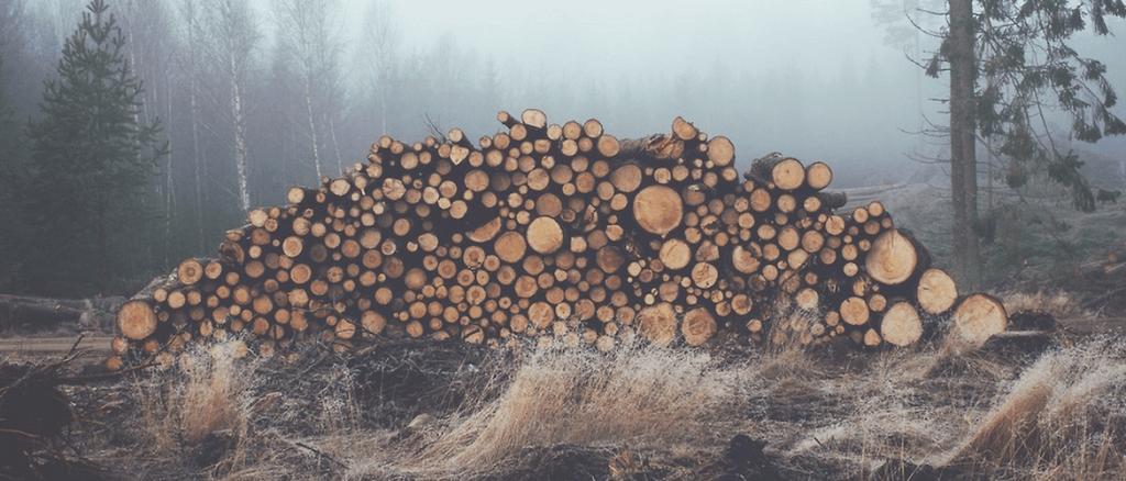 Troncos de árvores empilhados