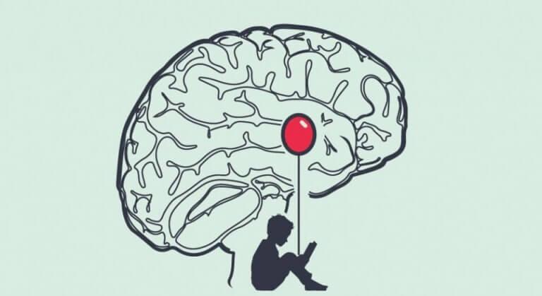 O cérebro de um mentiroso