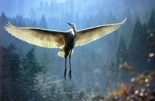 A comovente história do sábio e do pássaro