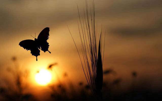 Pôr do sol e borboleta