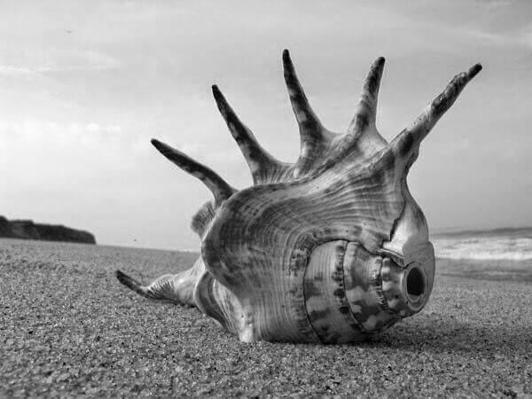 Concha enorme na praia