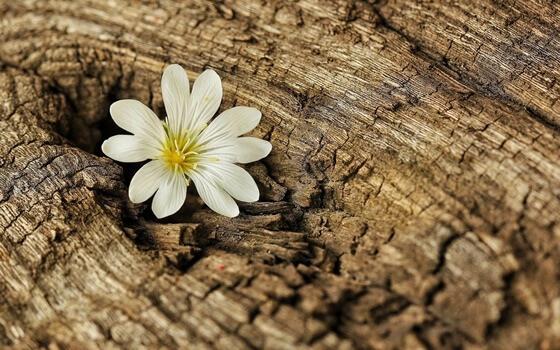 Flor nascendo em tronco