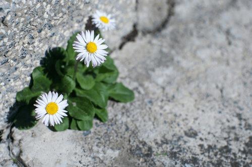 Flores nascendo no asfalto
