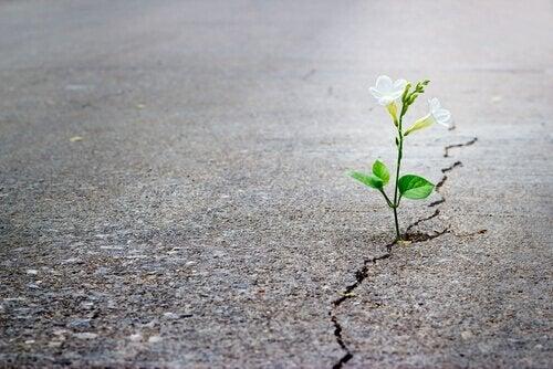 Planta crescendo no asfalto
