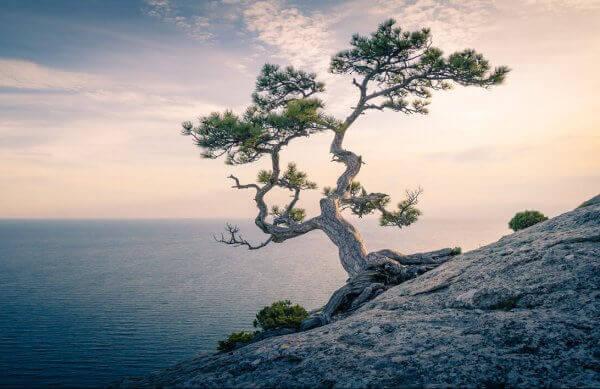 Árvore em encosta íngreme