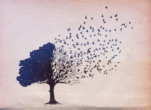 Pássaros voando de árvore