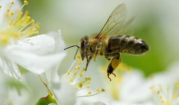 5 lições que podemos aprender com as abelhas