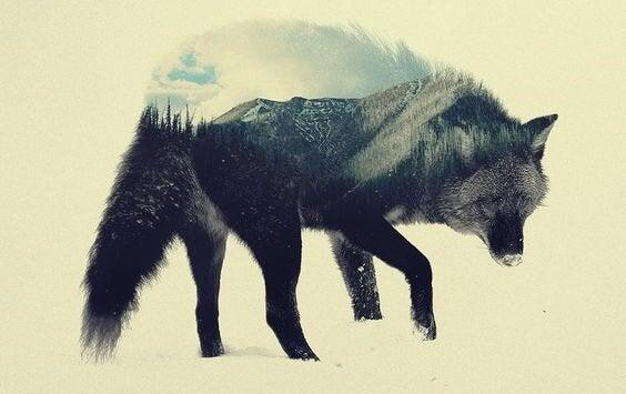 Lobo com paisagem florestal