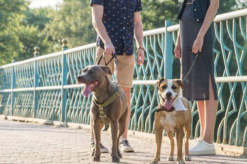 Dois estranhos com seus cachorros conversando