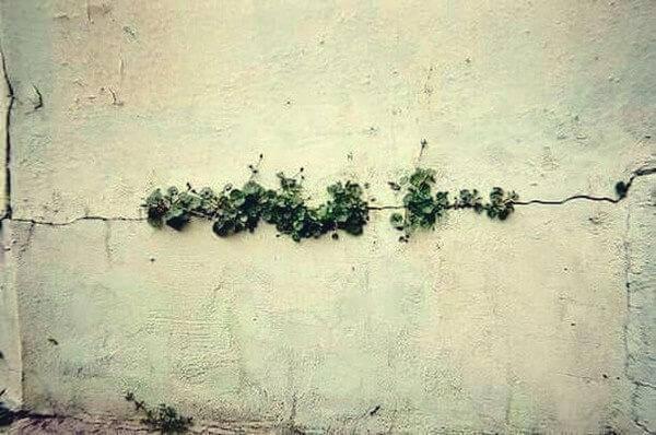 Plantas crescendo em rachadura na parede