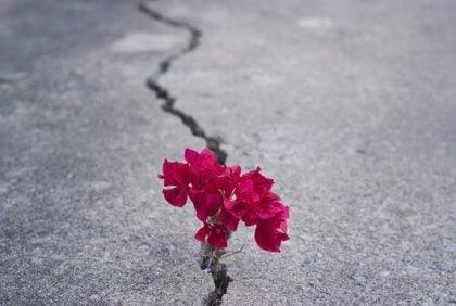 Flor crescendo em rachadura no asfalto