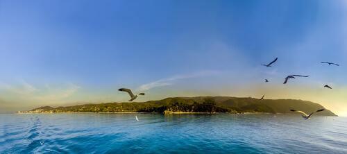 Pássaros voando perto de ilha