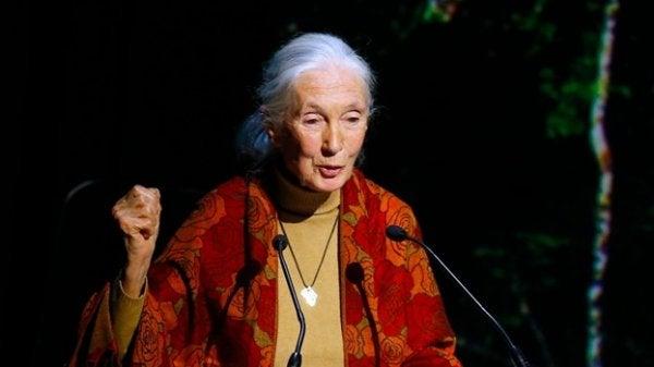 Jane Goodall dando palestra