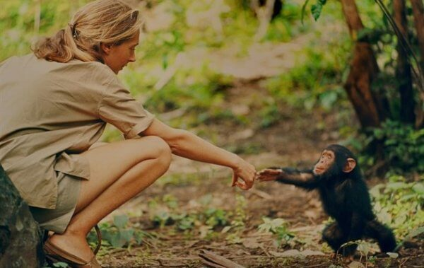 Jane Goodall cumprimentando chimpanzé
