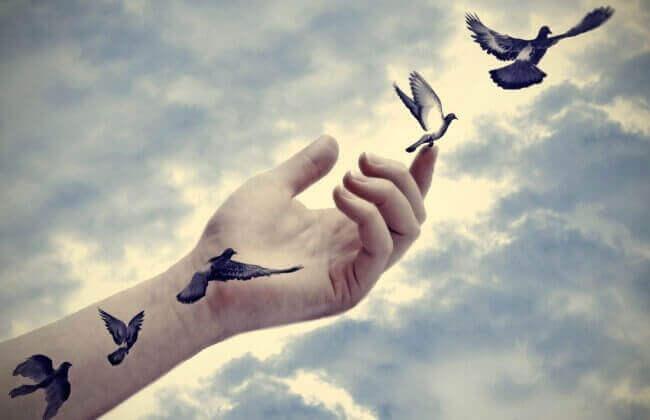 Pássaros voando de braço