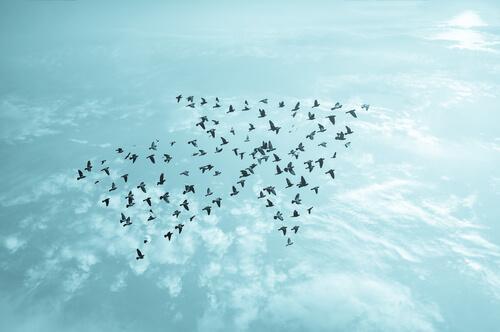 Pássaros indicando caminho