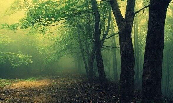 Teste do bosque aplicado pela psicanálise