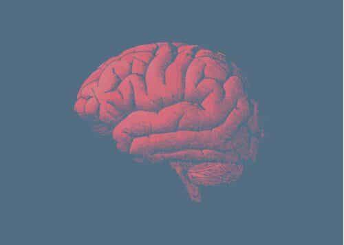 Por que o cérebro envelhece? A resposta está nos genes