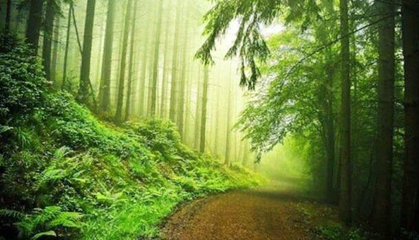 Detalhes sobre o teste do bosque