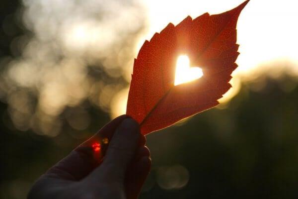 Combater os erros emocionais para alcançar a felicidade