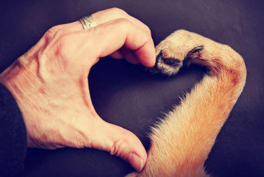 Amor por um animal de estimação