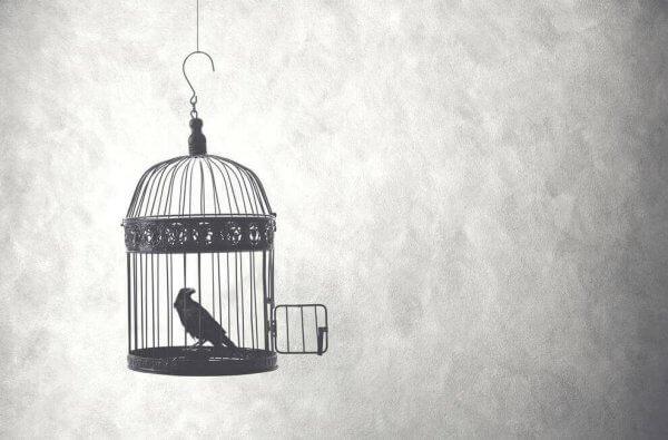 Pássaro em gaiola com a porta aberta