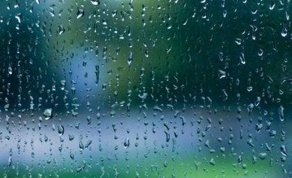 O som da chuva: melodia de calma para o nosso cérebro