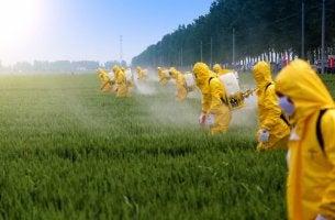 Efeitos dos pesticidas no cérebro