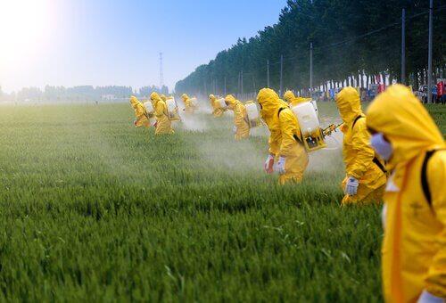 Os efeitos dos pesticidas no cérebro