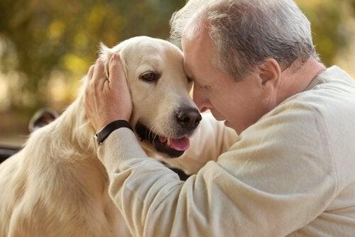 Terapia assistida por animais para idosos com Alzheimer
