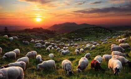 O mago e suas ovelhas, um inspirador conto oriental